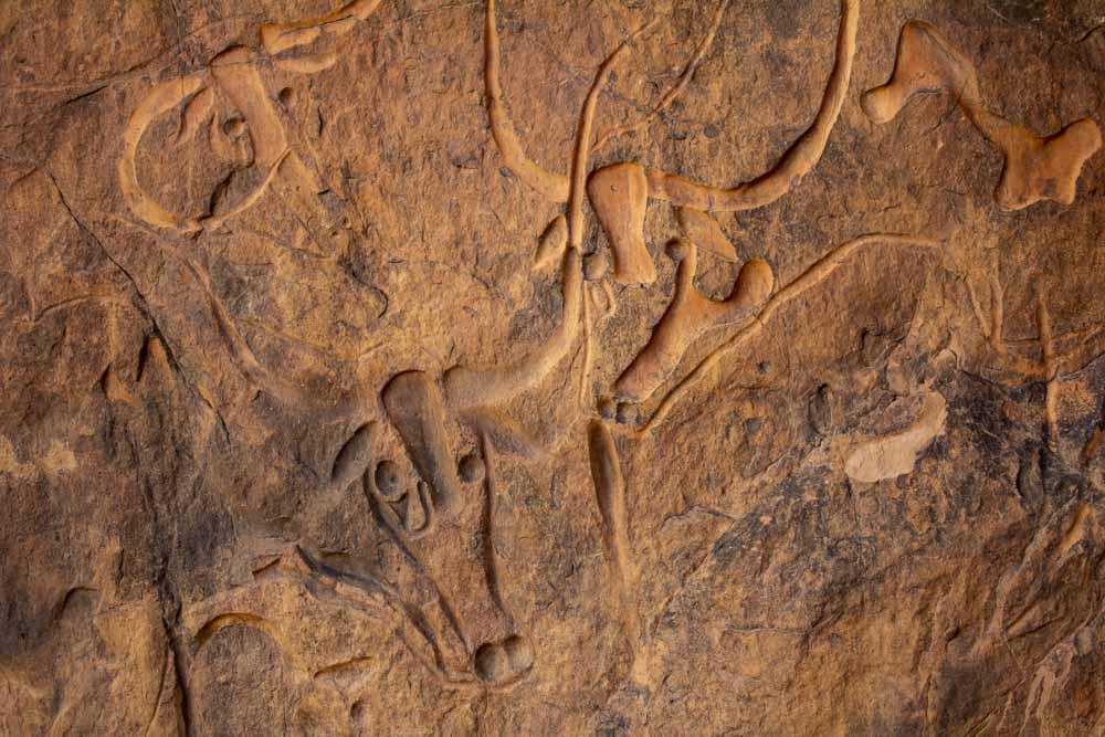Crying Cow - prastaré malby -Tinariwen tours - cesta na Saharu